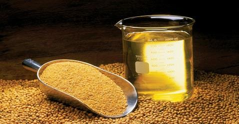 SEBI allows trading of soya oil in the Exchanges