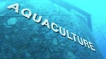 Aquaculture receives FM's attention, Avanti Feed, Waterbase soar