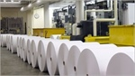 Paper stocks face dilemma of rise in pulp prices